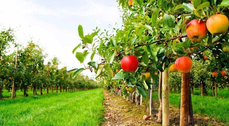 Ziraat Bankası Meyve Bahçesi Kredisi 2020 Şartları