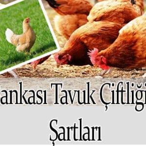 Ziraat Bankası Tavuk Çiftliği Kredisi  Şartları 2021