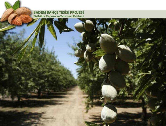 Badem Bahçesi Kurma Maliyeti ve 1000 Dekarlık Proje