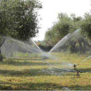 Zeytin Bahçelerine Devlet Desteği 1.000 Hazır Proje