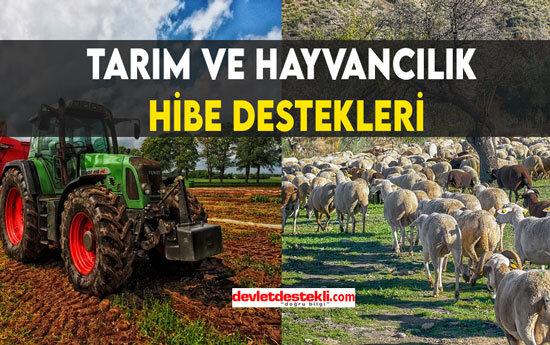 Tarım ve Hayvancılık 2021 Hibe Destekleri