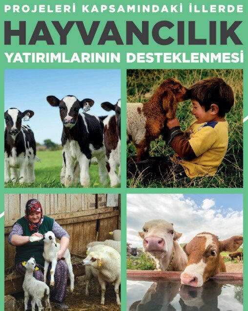 GAP DOKAP GAP KOP Yüzde 50 Hayvancılık Hibesi Resmi Gazete'de Yayınlandı
